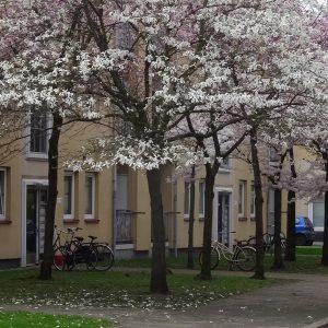 straatbeeld in zuidwest, Den Haag een ongedeelde stad?